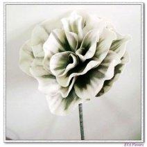 634898-flower imita white flower met vrucht