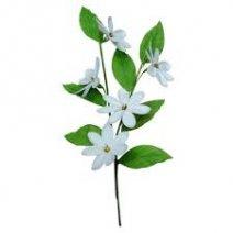 0044 virág