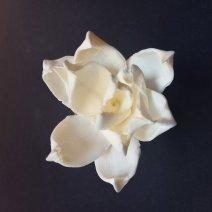 Virág 5272