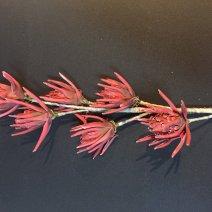 Virág 1304
